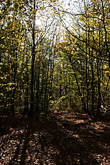 Herbstwanderung vom KKV_4